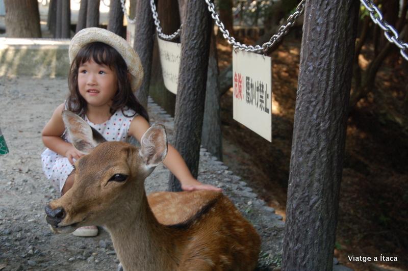 Nara8
