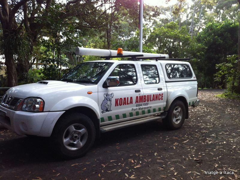 KoalaHospital17