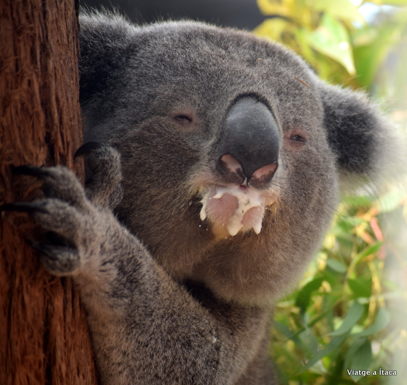 KoalaHospital5