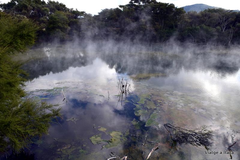 Rotorua7