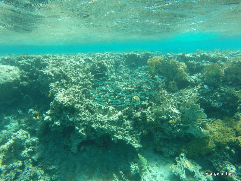 Aqaba28