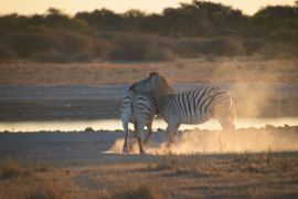 Botswana0