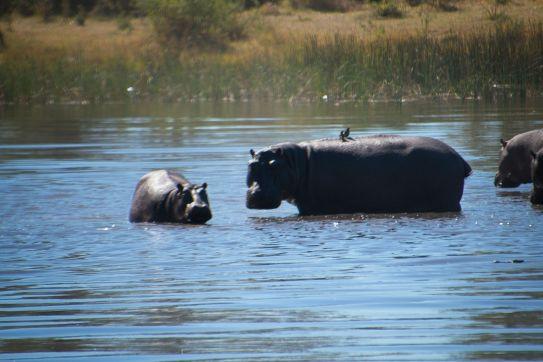 Botswana14