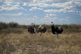 Botswana9