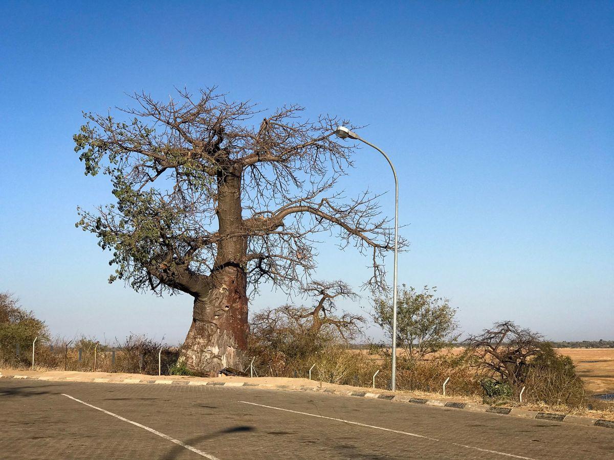 Frontera Botswana Namibia